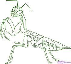 Praying Mantis Diagram Google Search Mantis Tattoo Praying Mantis Animal Drawings