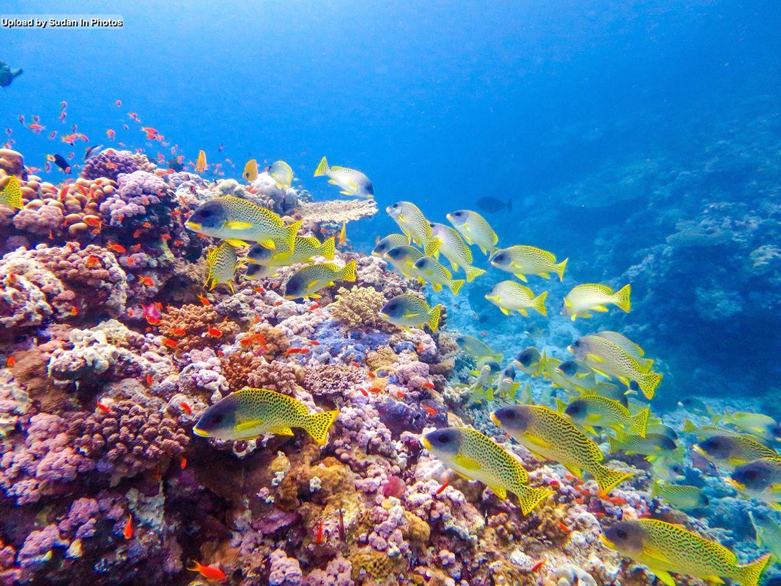 Coral Reef Port Sudan Red Sea الشعاب المرجانية بورتسودان البحر الأحمر السودان By Izziere Sudan C Botanical Illustration Original Artwork Artwork