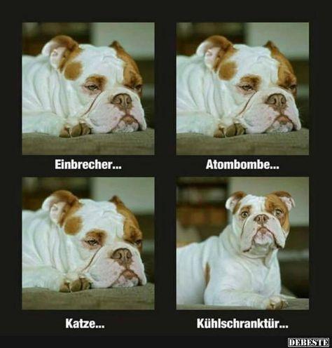 Einbrecher.. | DEBESTE.de, Lustige Bilder, Sprüche, Witze und Videos #funnydogs