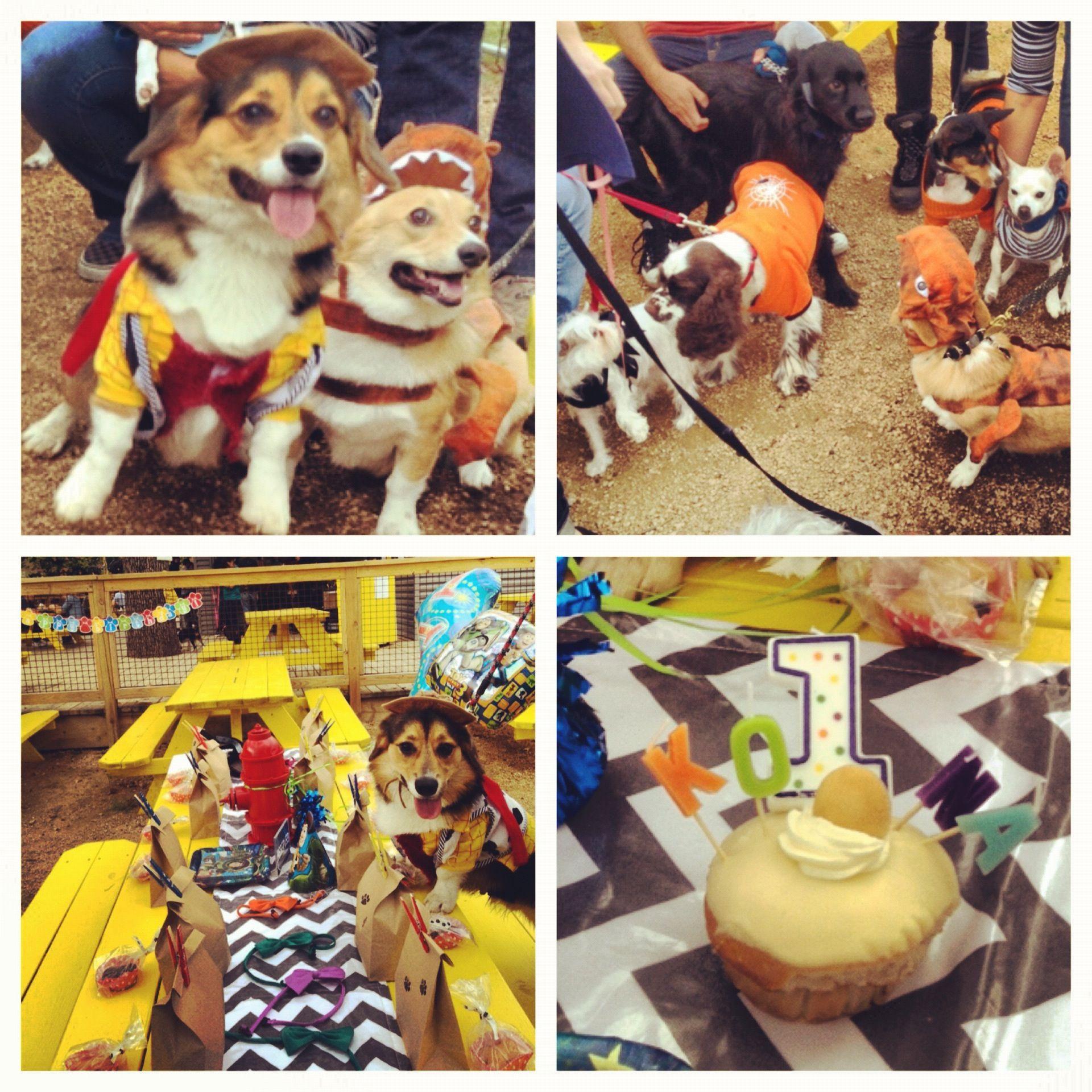 Dog Birthday Party Mutts Cantina Kona The Corgi Dog Birthday Dog Park