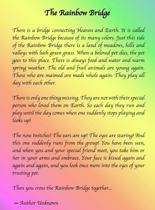 graphic regarding Rainbow Bridge Printable named Rainbow Bridge Poem Upon Pinterest Rainbow Bridge Pet dog Rainbow