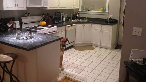Craigslist Ad Enhanced by Photo-Bombing Dog (With images ...