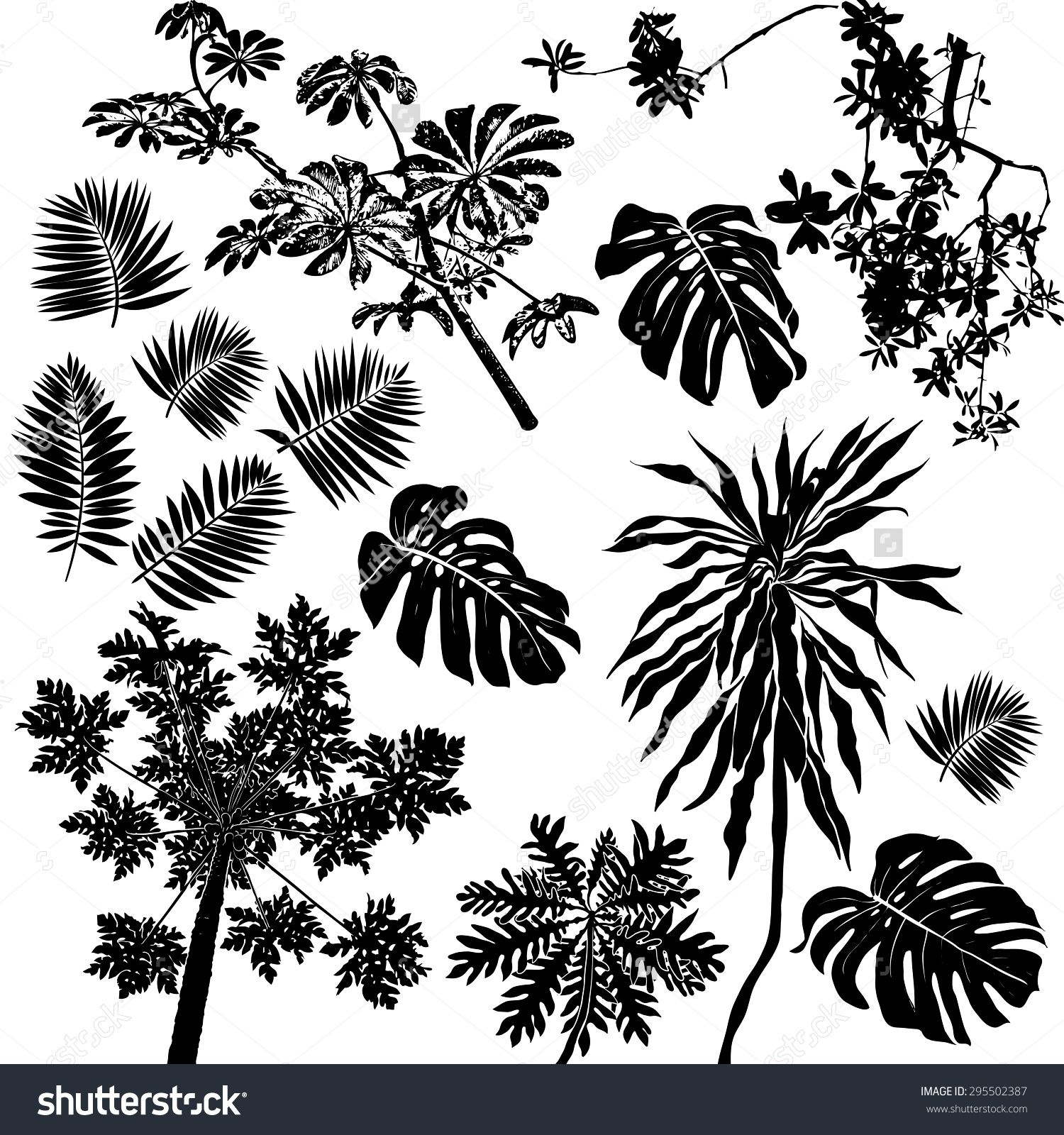 Vector Set Black Silhouettes Tropical Leaves Palms Trees