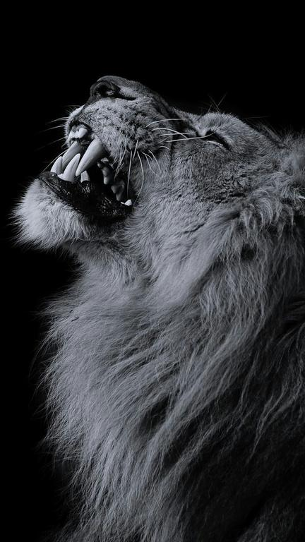 (9)MeWe The NextGen Social Network Lion wallpaper