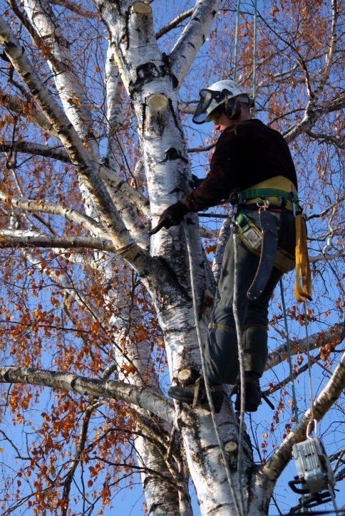 Pin on Jarmey Tree Service