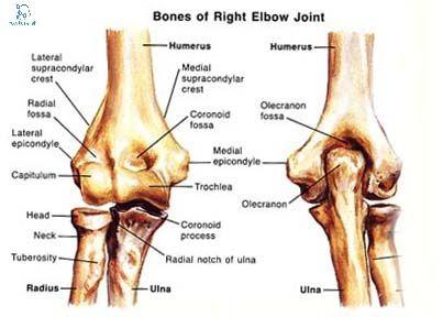 elbow-joint-anatomy