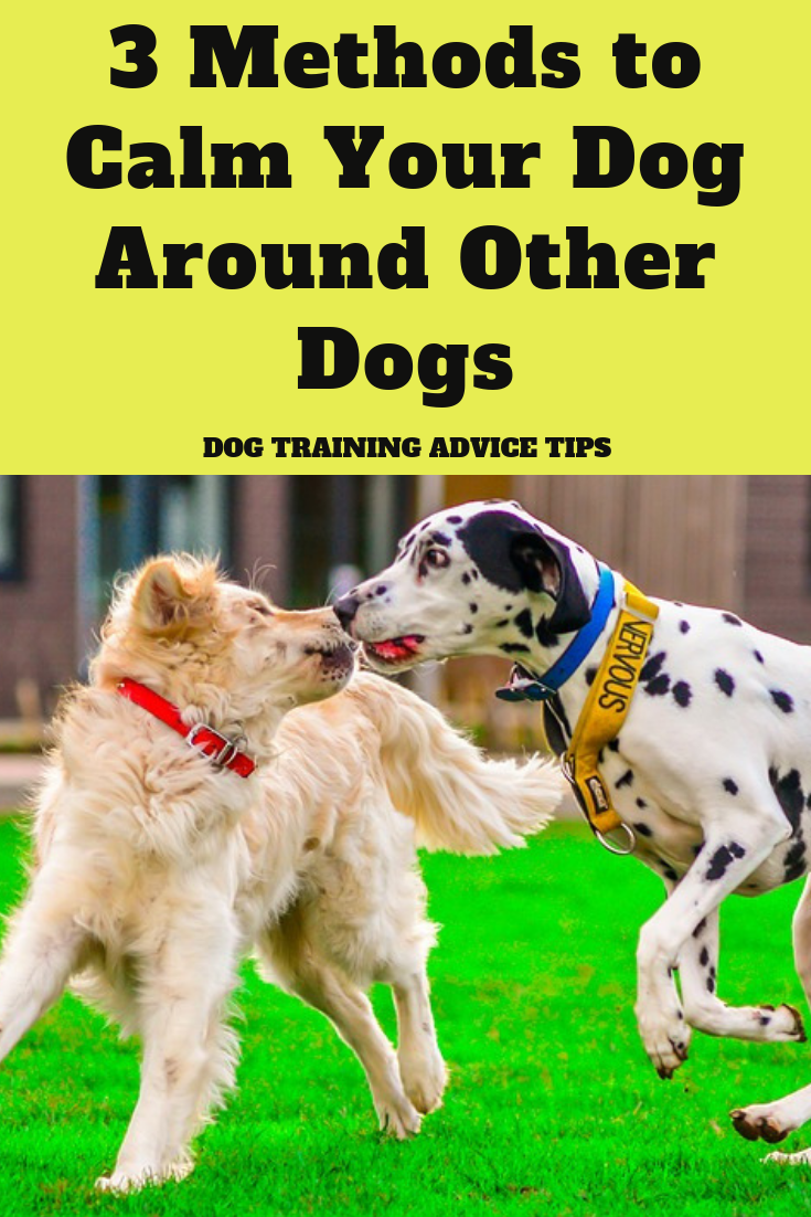 3 Methods To Calm Your Dog Around Other Dogs Dog Training