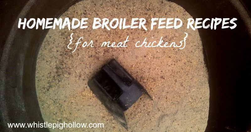 Homemade Broiler Feed Recipes Whole Grain Feed Rations For Meat
