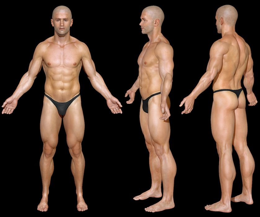 Generic Male Muscles Cerca Con Google Cg Pinterest Anatomy