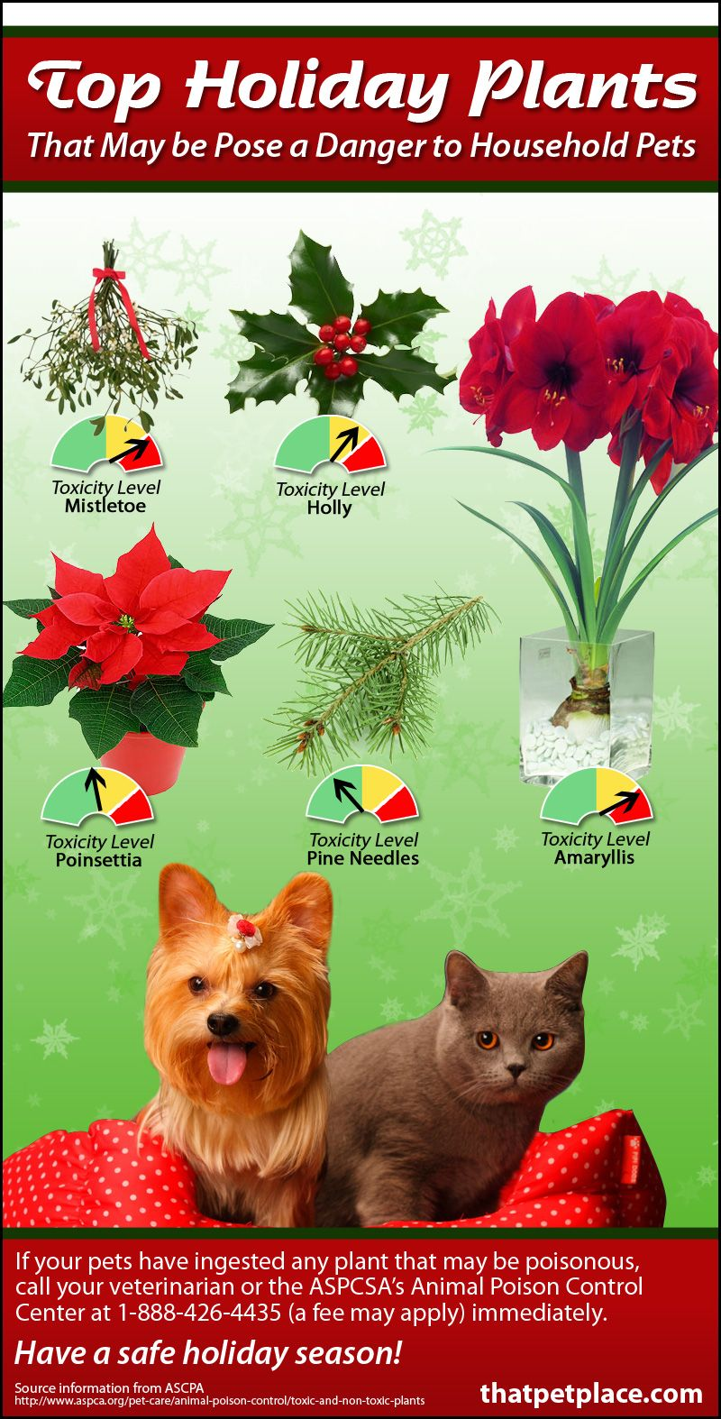Holiday Plants Toxic To Your Pets Thatpetplace Com Your Pet Animal Infographic Pets