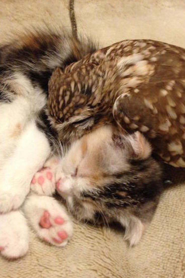 These Unlikely Friends Will Make You Want To Cuddle Up Kittens Cutest Kitten Pictures Cute Cats