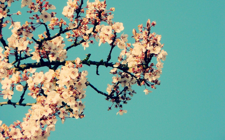 Pin De Serena Em Photography Wallpaper Tumblr Pc Papel De Parede Tumblr Planos De Fundo Tumblr