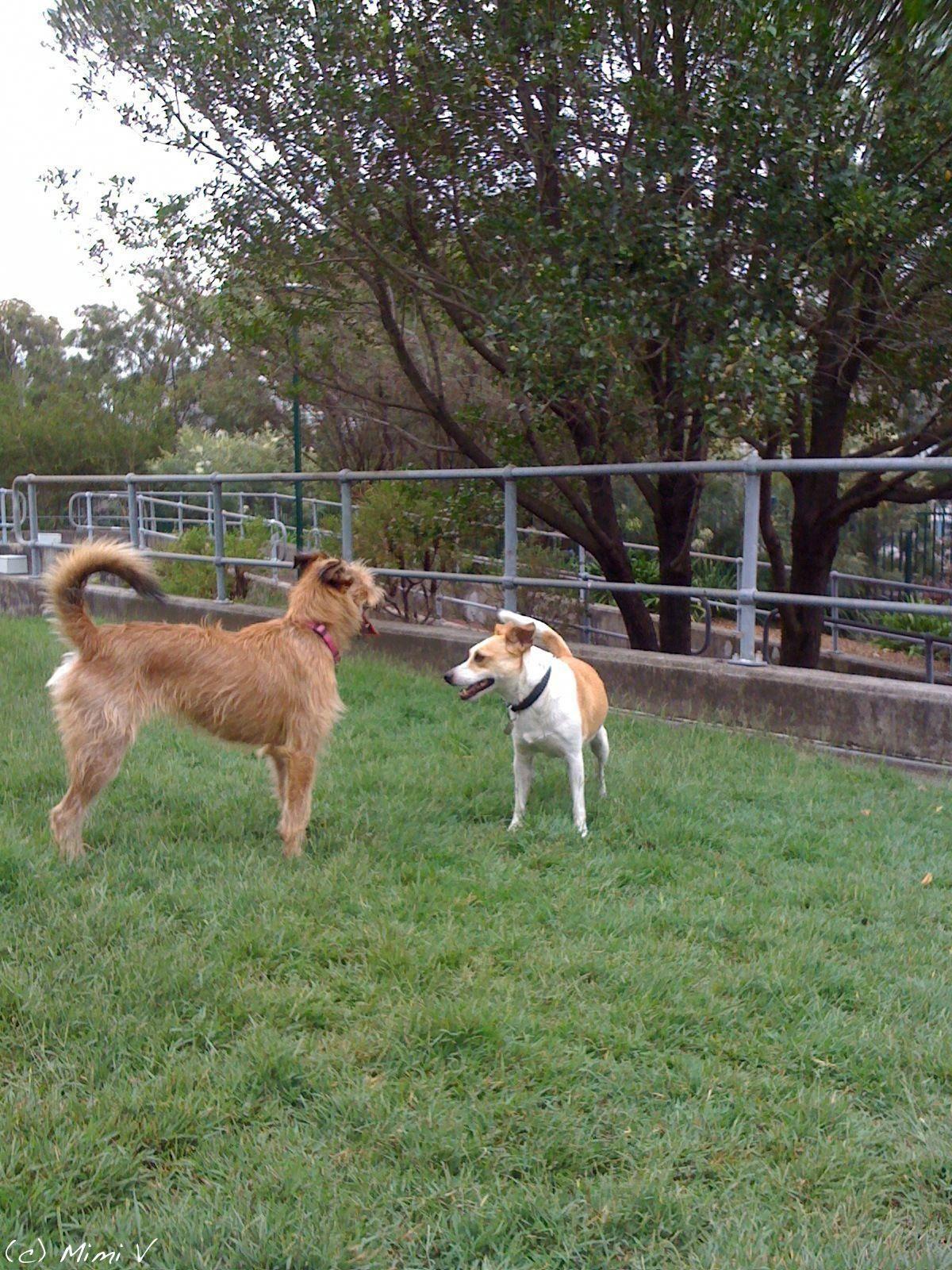 Cheap dog grooming near me luxurydogboarding code