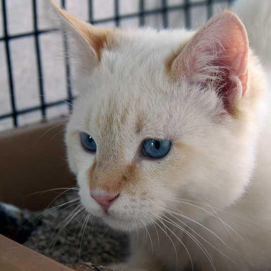 Adopt A Pet Animals Pet Adoption Cat Adoption