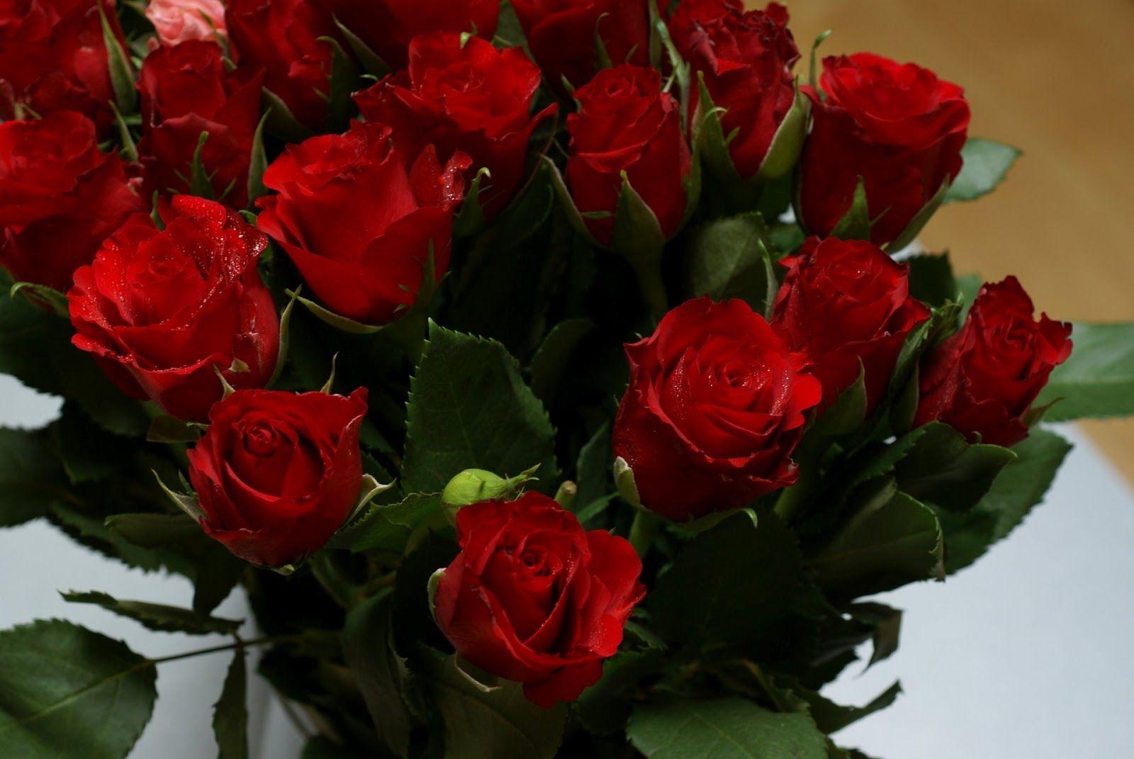 Diversas - Imagens de rosas