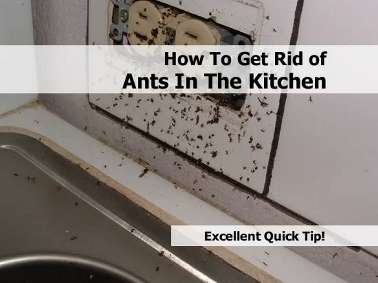 How To Get Rid Of Ants In The Kitchen Diy All In One Get Rid Of Ants Rid Of Ants Ants