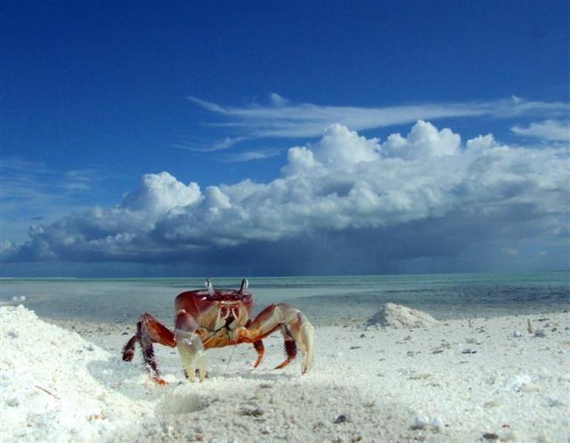 Where Is Christmas Island.Christmas Island Kiribati Millennium Island The Pacific