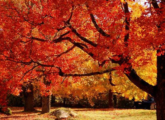 Best Places To Visit Fall Foliage Fall Foliage Fall Pictures Autumn Trees