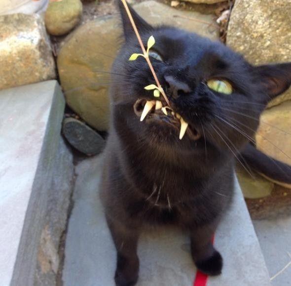 Rescue Kitten with 'Vampurr Fangs' Steals Woman's Heart