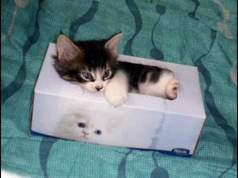 Kittens Attack The Tissue Boxes - #funny #kittens