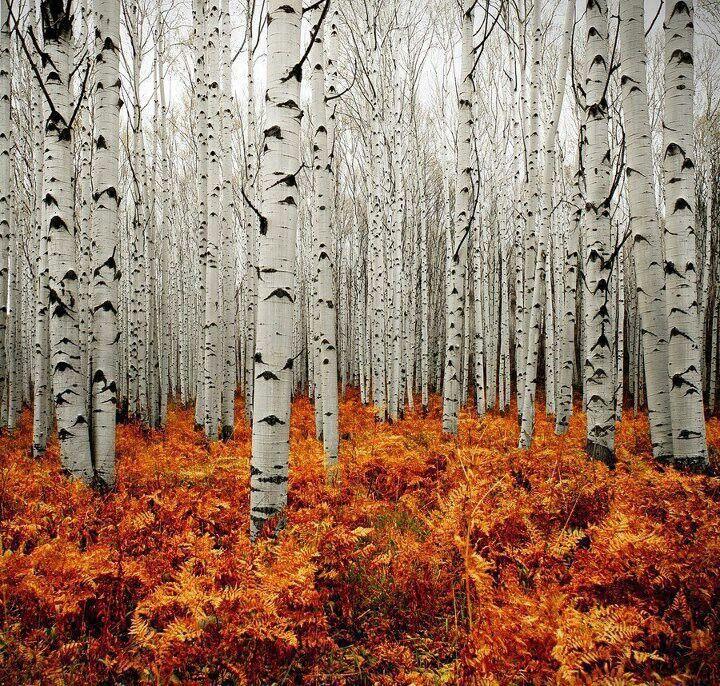 Märchenzauber im finnischen Birkenwald