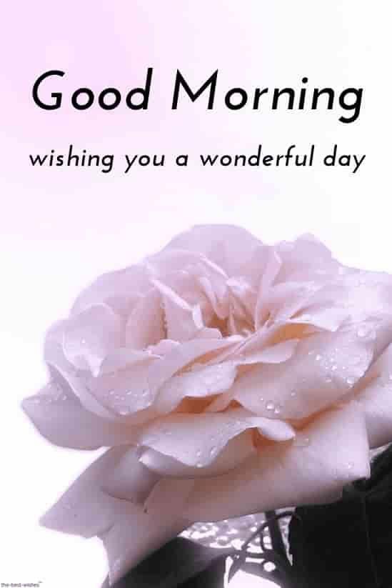 Guten morgen hd