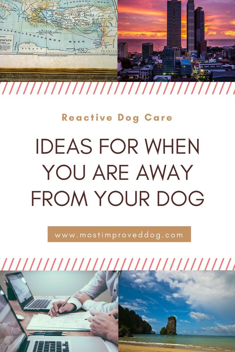 What do you do with your dog when you have to leave them? When you've got a reactive dog, this question can get complicated. We've got some ideas and tips for you!