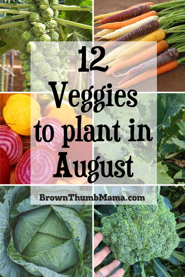 Photo of 12 Vegetables to Plant in August {Zone 9} | Brown Thumb Mama…