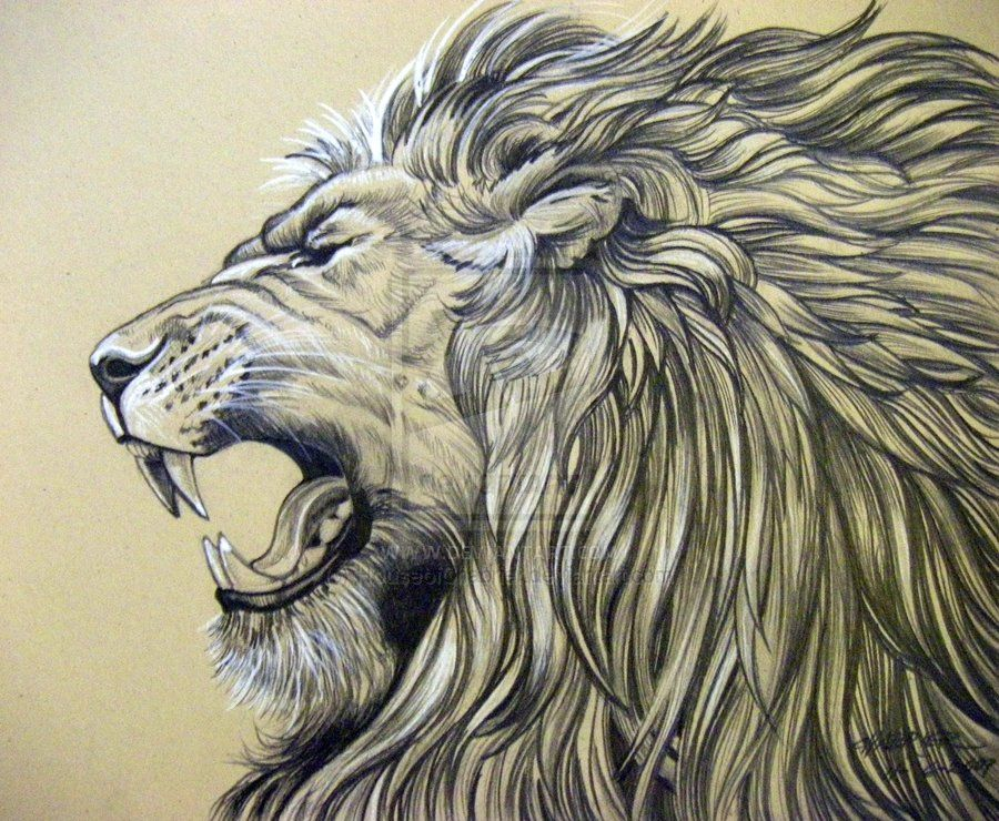 Line Drawing Of Lion : Identity thief roaring lion tattoo lions and