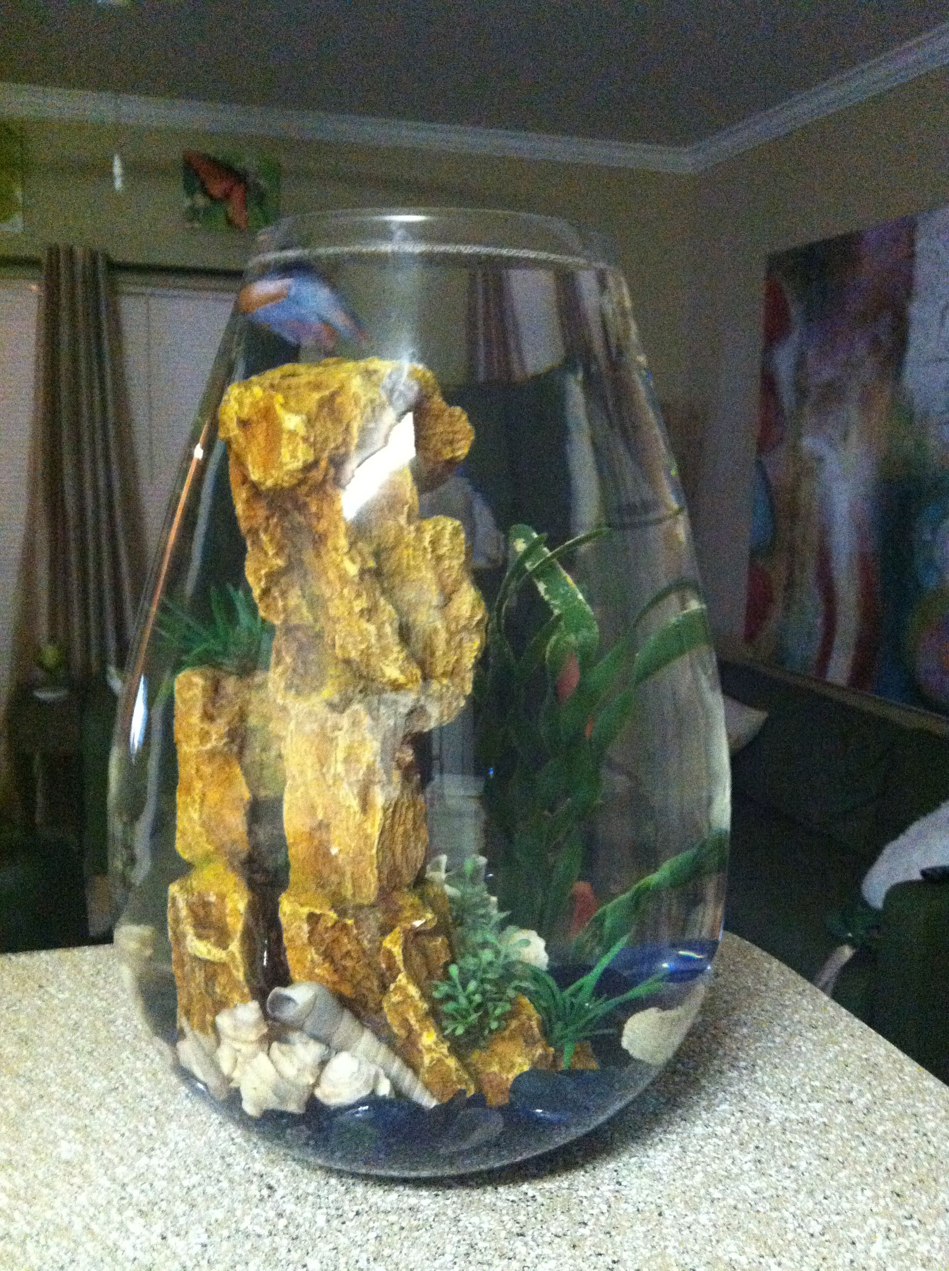 Flower vase with fish - Looking For A Creative Bowl For Your Betta Fish Try An Over Sized Flower