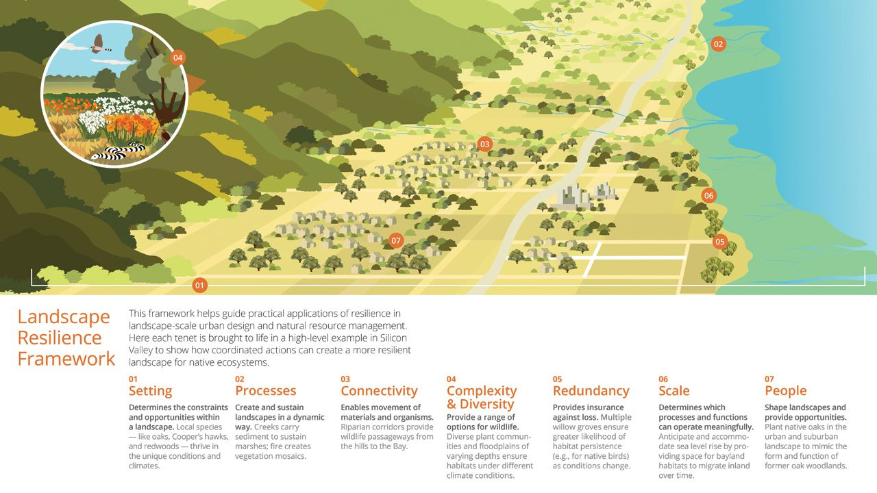 How Google Is Restoring Wildlife Habitats In The Middle Of