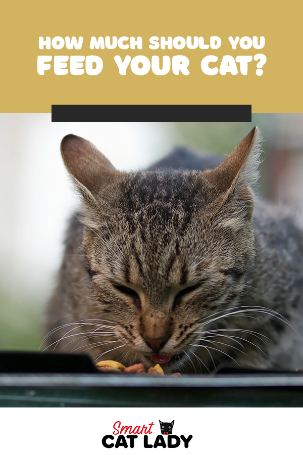 How Much Should You Feed Your Cat Cat Feeding Guide Cat Feeding Kitten Care