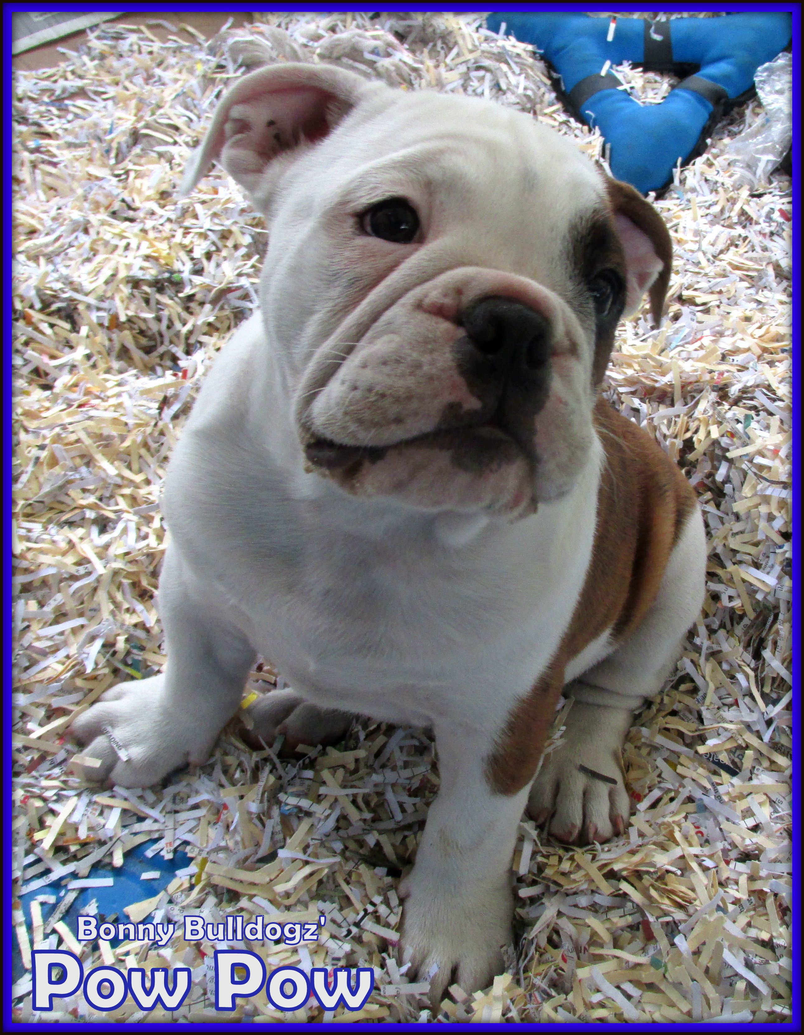 Pin By Virginia Moore On My Bulldogs Their Relatives Animals
