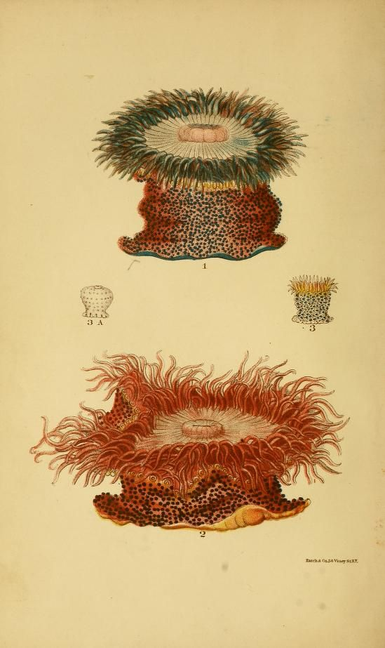 from the 1872 edition - Corals and coral islands. - Biodiversity ...