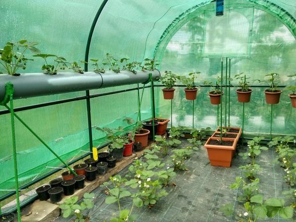 Cómo Hacer Un Invernadero Casero Un Invernadero Casero Es La Mejor Opción Para Poder Te Invernadero Casero Como Hacer Un Invernadero Jardinería De Invernadero