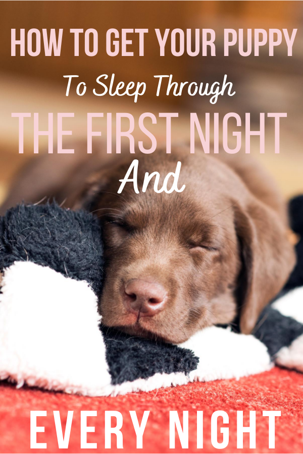 How To Get Your Puppy To Sleep Through The First Night And Every Night In 2020 Sleeping Puppies Puppy Schedule Kennel Training A Puppy