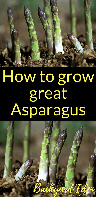 Comment Planter Des Asperges 6 easy tips to start your own vegetable garden | jardin de