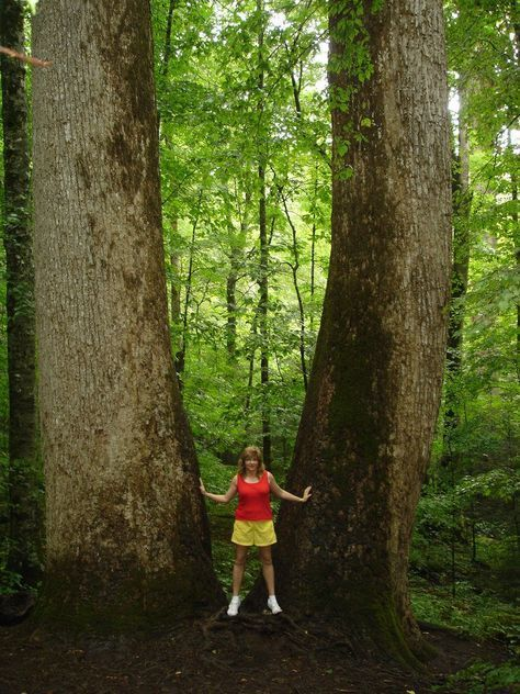 The Ancient Forest In North Carolina Thats Right Out Of A Storybook