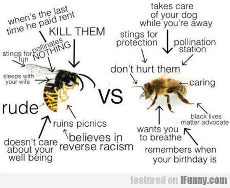 Wasp Vs Bee Wasp Bee Funny