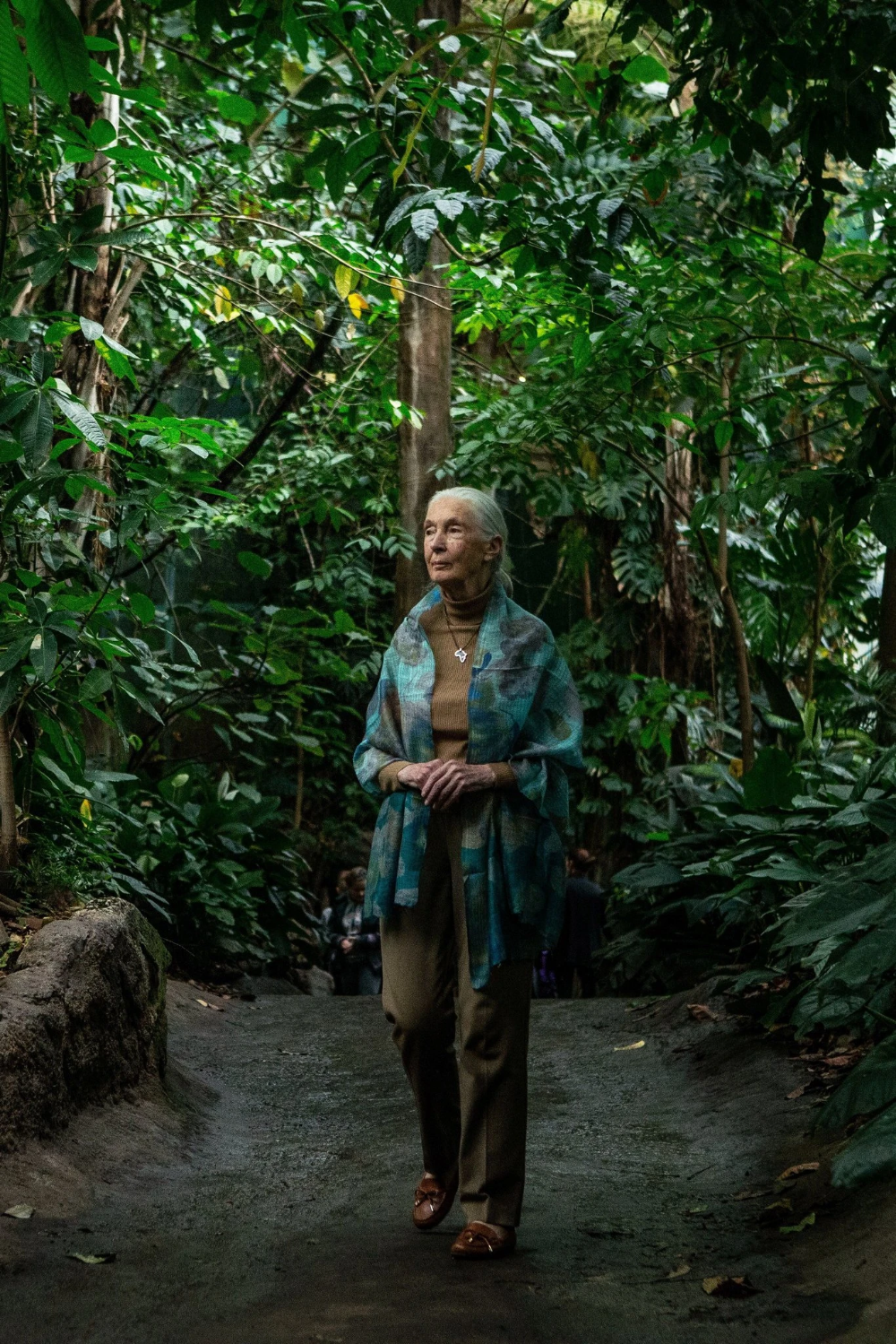 Jane Goodall Is SelfIsolating, Too in 2020 Jane goodall
