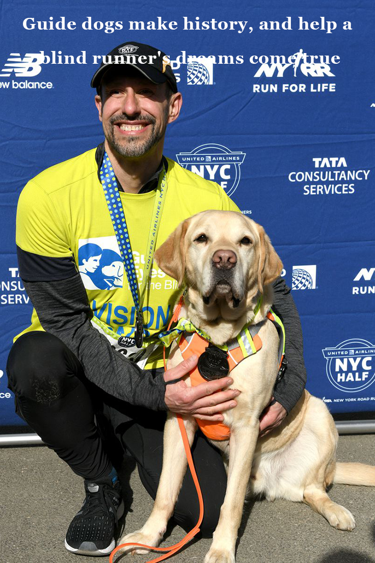 Guide Dogs Make History And Help A Blind Runner S Dreams Come True Guide Dog Guide Dog Training Labrador