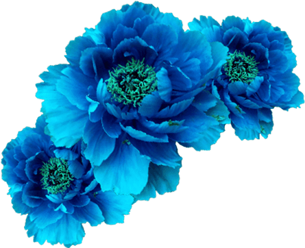 Wreath Aqua Transp Free Blue Flower Crown Blue Flower Crown Crown Png Blue Flower Png