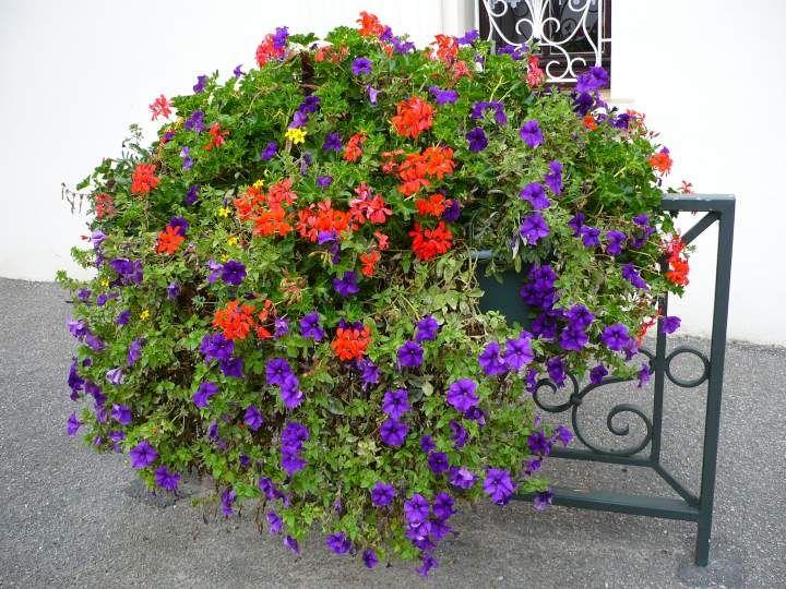 jardinieres fleuries recherche google jardini res et balconni res fleuries pinterest. Black Bedroom Furniture Sets. Home Design Ideas