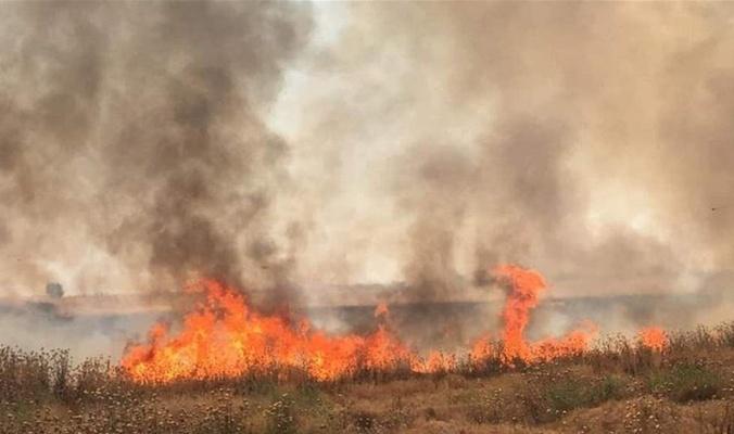 الكشف عن أحد أسباب حرق المحاصيل في العراق Painting Country Roads Art