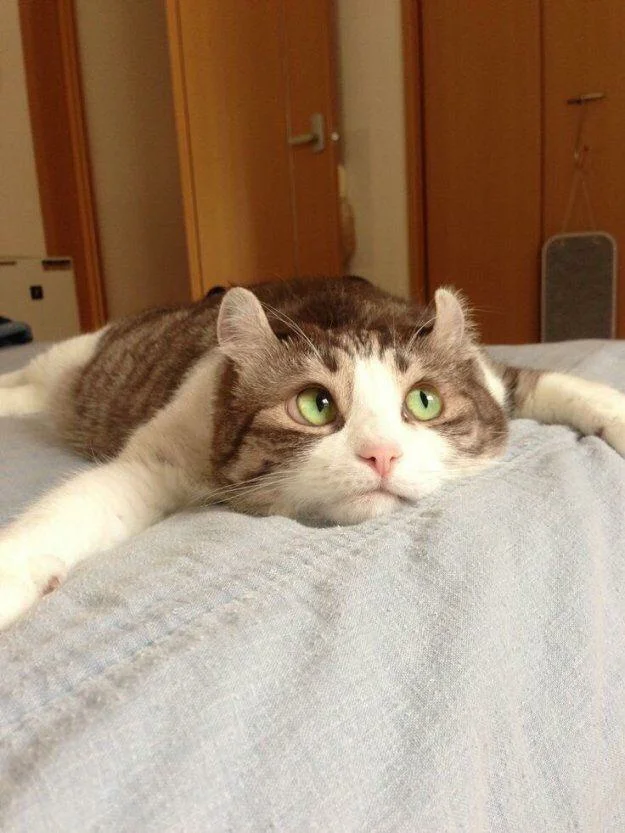 Смешные коты, которые поднимают настроение #69