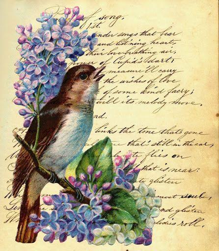 Lilac bird for decoupage