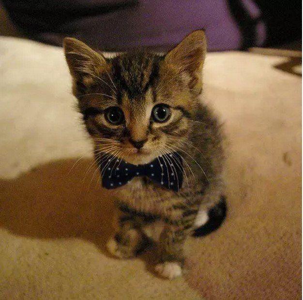 Прикольные фото котят | Сумасшедшие кошки, Детеныши ...