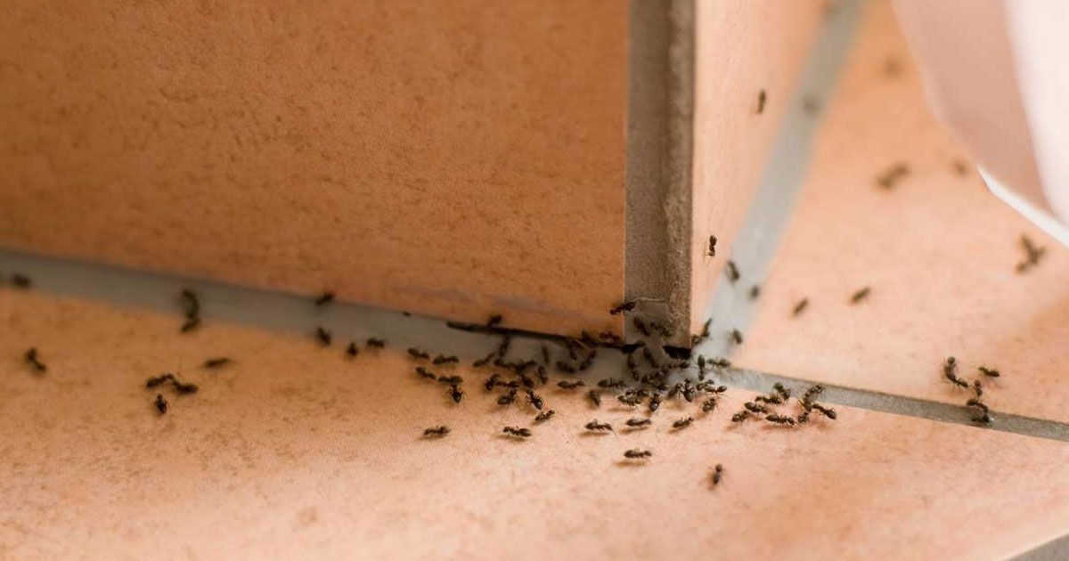10 Brilliant Ways To Get Rid Of Pests And Ants In The Kitchen