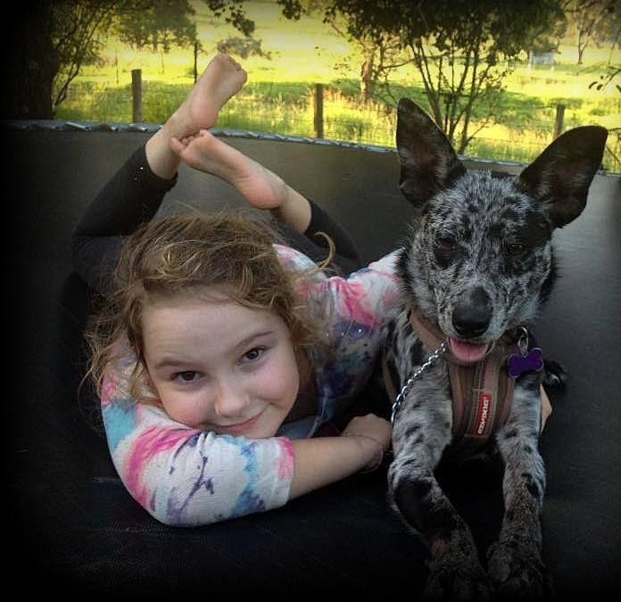 Australian Koolie Rescue Bamawm, Melbourne . Australian