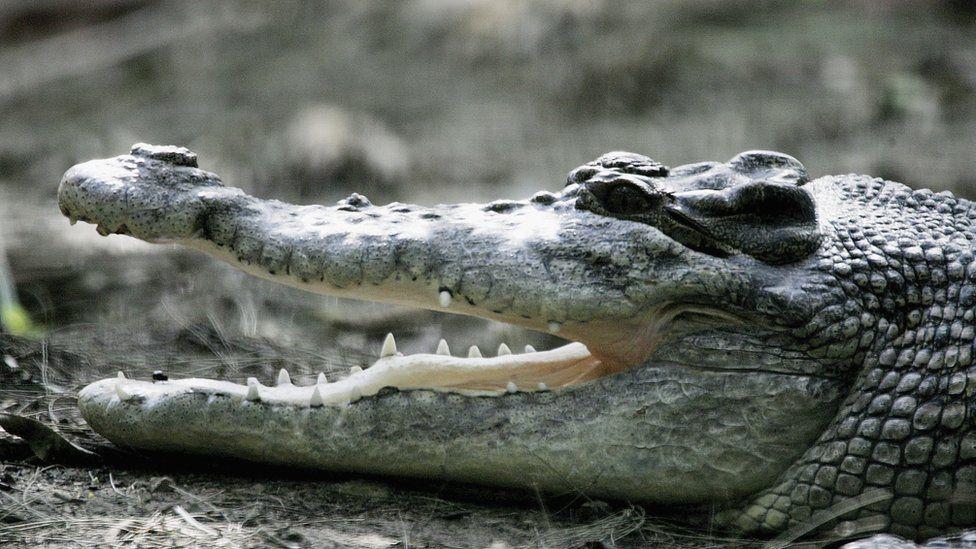 рассказы картинки крокодилов и змей объему оно раза